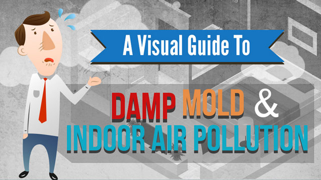Damp-Mold